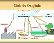 etapas-do-ciclo-do-oxigenio-1