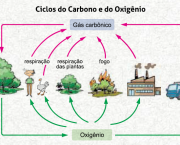 etapas-do-ciclo-do-oxigenio-2