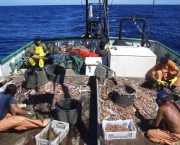 participacao-da-aquicultura-no-setor-pesqueiro-nacional-3