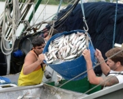 participacao-da-aquicultura-no-setor-pesqueiro-nacional-4