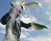 participacao-da-aquicultura-no-setor-pesqueiro-nacional-6