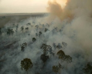 burning the Amazon Rainforest