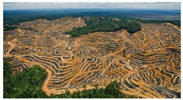 Resultado de imagem para Desmatamento na Amazônia Brasileira!