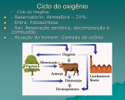 etapas-do-ciclo-do-oxigenio-12