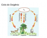 etapas-do-ciclo-do-oxigenio-13