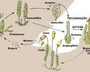 a-classificacao-biologica-moderna-6