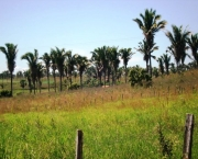 a-riqueza-da-vegetacao-do-maranhao-4