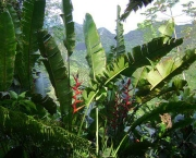 floresta-tropical-pluvial-15