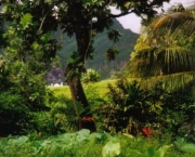 floresta-tropical-pluvial-9
