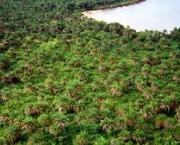 florestas-africanas-1