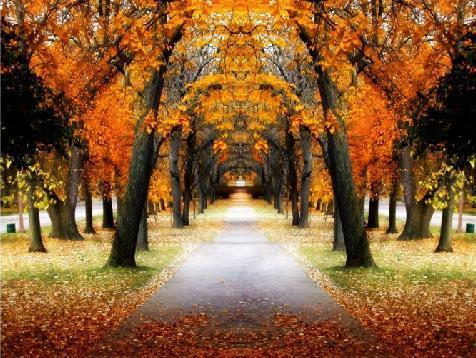 papel-de-parede-do-outono-6