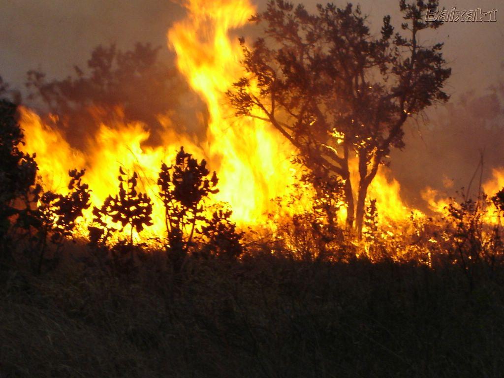 Resultado de imagem para foto de queimadas