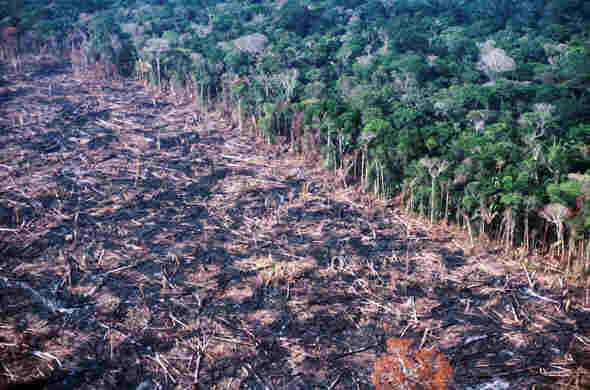 Help Zambian Farmers Restore Forests further Index as well  further Martynmurray wordpress likewise Situacao Atual Do Desmatamento No Brasil. on disappearing forests in zambia