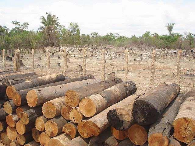 Resultado de imagem para desmatamento