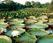 vegetacao-do-pantanal-11
