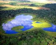 vegetacao-do-pantanal-15