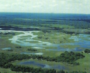 vegetacao-do-pantanal-3