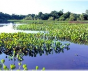 vegetacao-do-pantanal-4