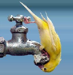 Falta D'água no Planeta