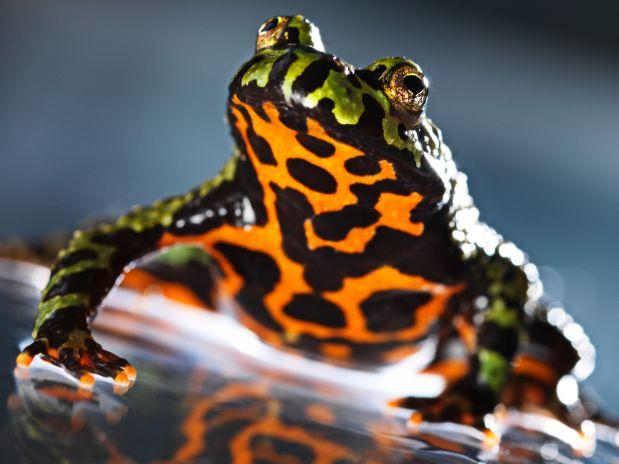 Animais Selvagens Encontrados na Amazonia (1)